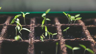 DLRR: os incentivos fiscais ao investimento das PME em 2020